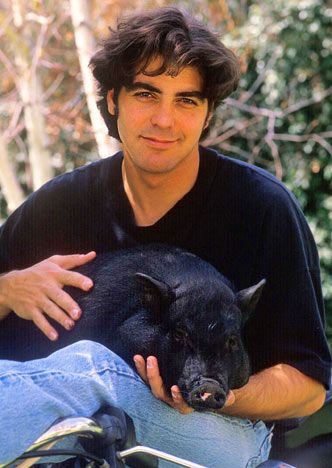 George Clooney with his pot-belly pig, Max